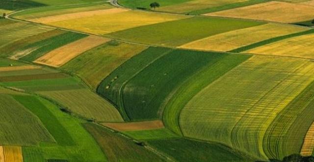 Снимка: Субсидиите след 2020 г.- ябълката на раздорав земеделието