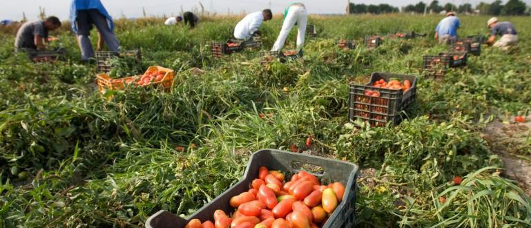 Микробус, регистриран в България, вози мигранти, чиито робски труд се