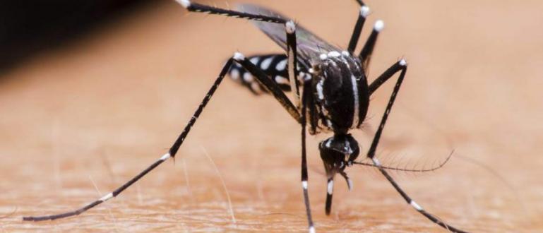 Предават ли комарите коронавирус? Това е въпросът, който всеки си