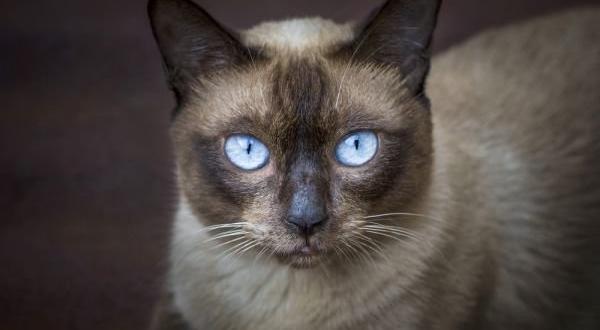 Популярност в мрежата набира видеоклип, който показва как домашна котка