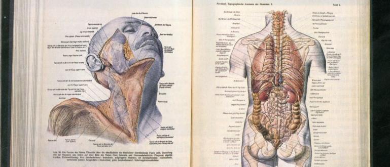 Нацистки атлас по анатомия се ползва от хиляди лекари до