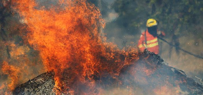 Снимка: Апетити за бразилско говеждо и соя стоят зад пожарите