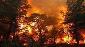 Снимка: Пожар гори край Реброво