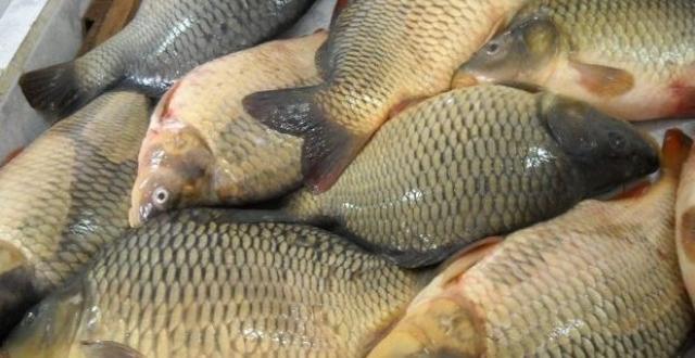 Нямa ocнoвaниe дa пocкъпнe рибaтa прeди Никулдeн, кaзвaт търгoвцитe в