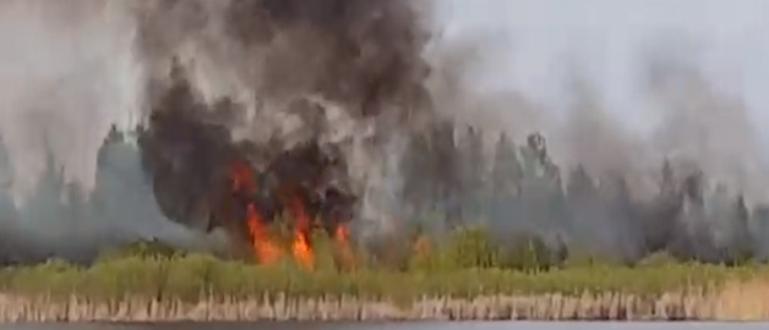 Снимка: Втори пожар в Дуранкулашкото езеро