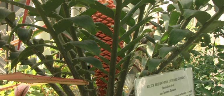 Ботаническата градина към БАН – повод за гордостПревратна е съдбата