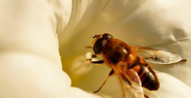 Ужилване от пчела се е оказало фатално за 30- годишен