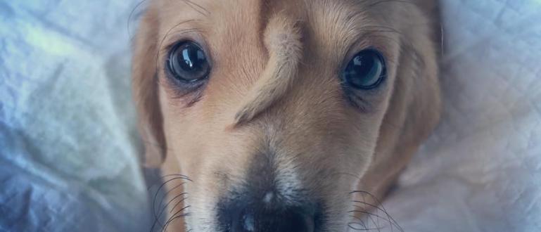 Спасено кученце се радва на огромно внимание и разтопи сърцата