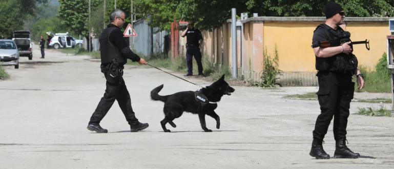 Полицейски и специални части продължават за девети пореден ден да