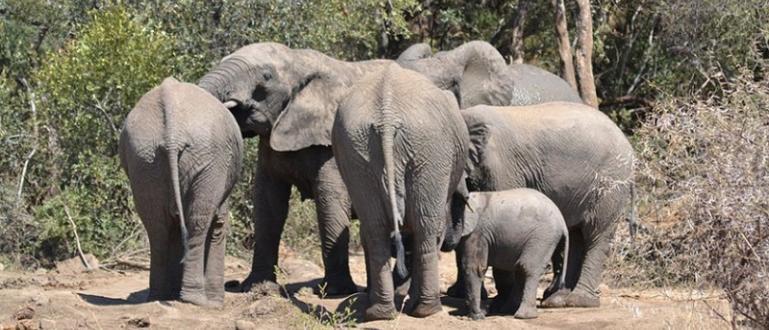 Животните унижожават реколтата и понякога убиват хораВ най-големия национален парк
