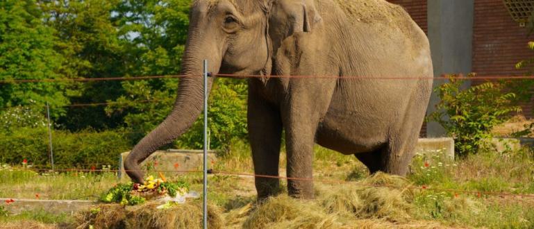 Софийският зоопарк днес отпразнува рождения ден на най-голямото си животно.