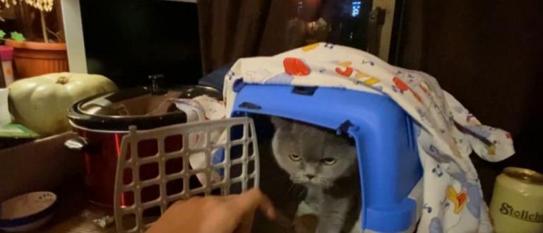 Стопани изхвърлиха красивата си домашна котка от порода британка на
