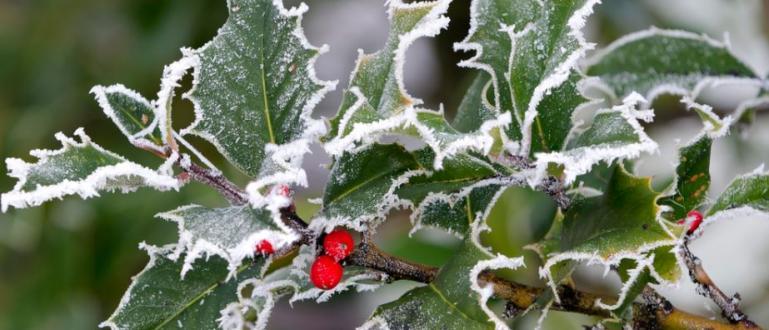 Зимата вече чука на вратата, температурите падат с всеки изминал