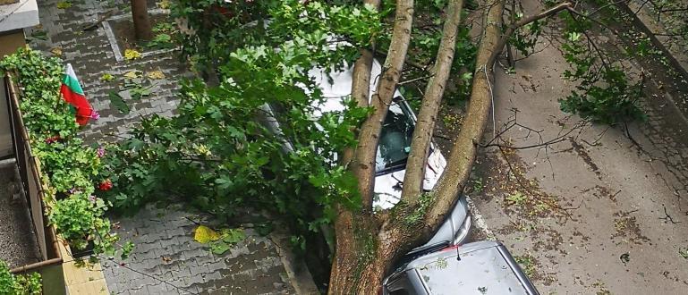 Огромен клон се откъсна след бурята в София и удари
