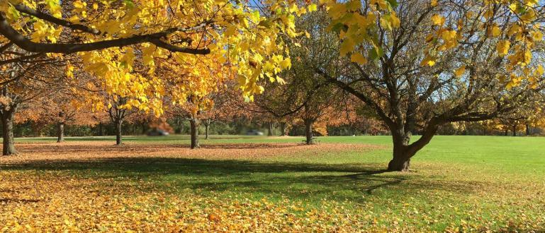 Очаква ни относително топла есен с нормално количество валежи за