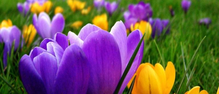 След снежните преспи в сряда и четвъртък пролетта се връща.