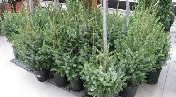 Министерство на земеделието, храните и горите стартира благотворителна кампания за