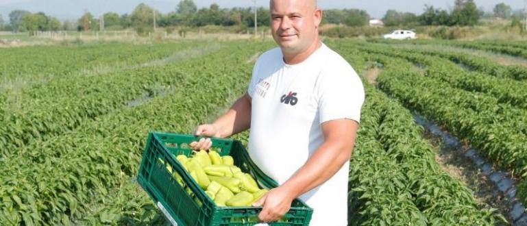"""Компанията """"Чери Дриймс"""" ООД произвежда зелена и червена чушка, лют"""