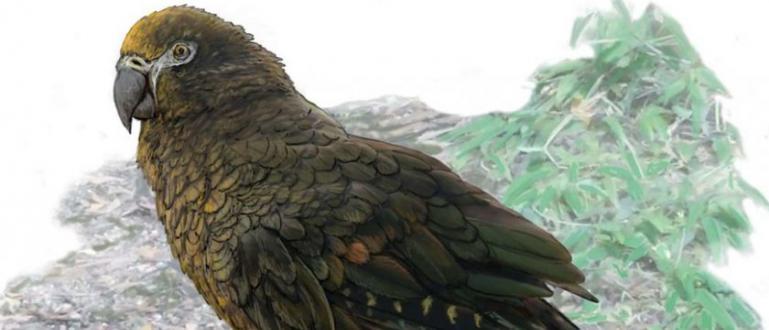 Нова Зеландия е прочута с огромните си птици - моа,