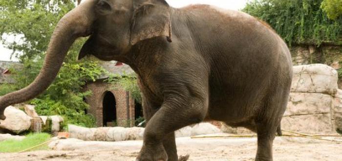 Животните ще бъдат изпратени в зоопаркаПравителството на Дания планира да