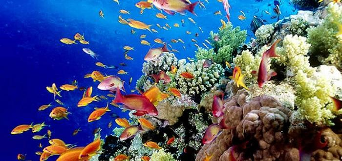 Горещините ги унищожаватУчени установиха, че корали отново са израсли край