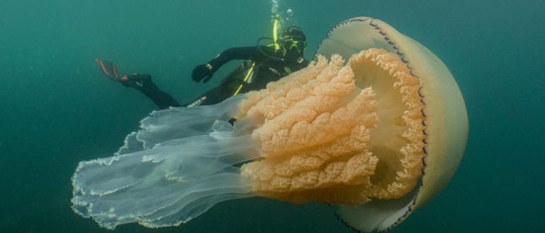 Британски водолази се натъкнали в крайбрежната зона на Корнуол на