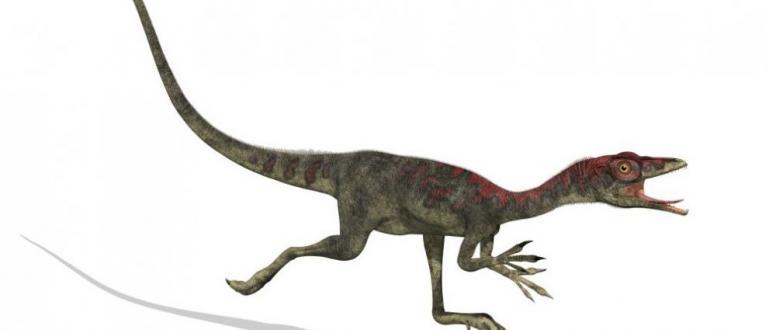 Откриха в Патагония останки от неизвестен вид малки месоядни динозаври,