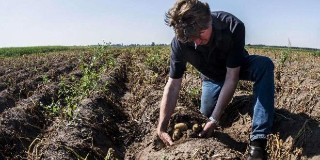 Отпада мораториумът за продажба на земеделски земи на чужденци. Това