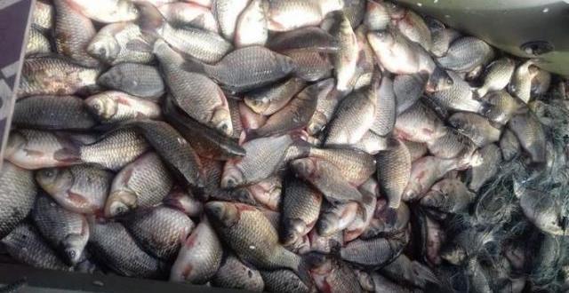 Полицаи в Монтана са конфискували близо 150 кг риба, съобщиха