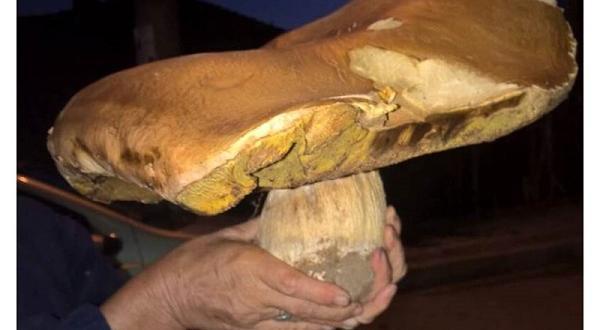 Урожаят от горски гъби в Смолянско е намалял през последните