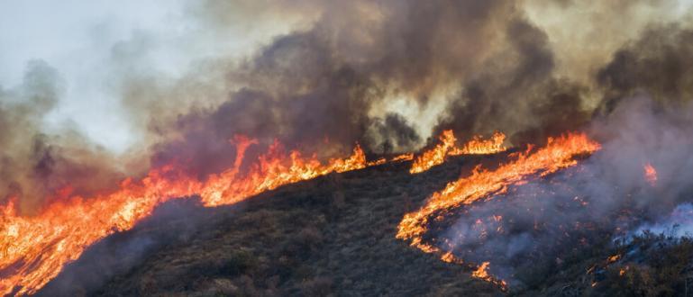 Труп на 74-годишен мъж е открит в обгорели площи в