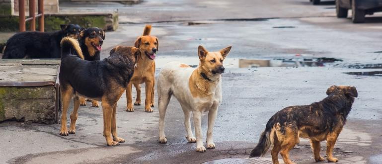 Бездомни кучета в Китай може да са пренесли новия коронавирус