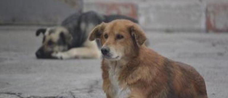 Десетки кучета са били изоставени край пътя за връх Перелик.