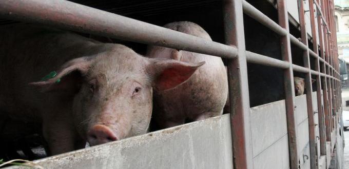 епизоотиите в България ще учредят ветеринари, юристи и общественици.