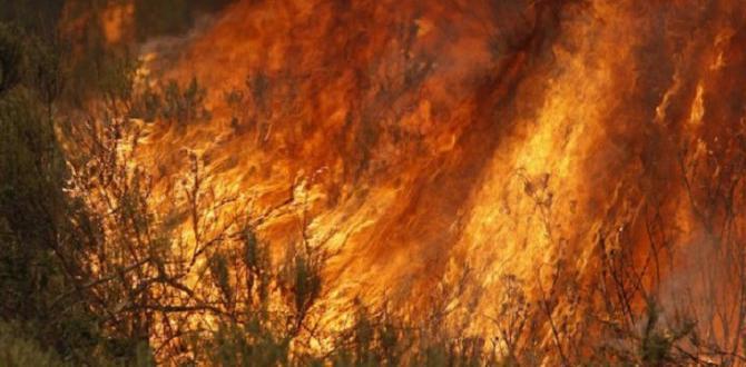 Температурите и усилването на вятъра пречат на гасенетоНад 500 пожарникари