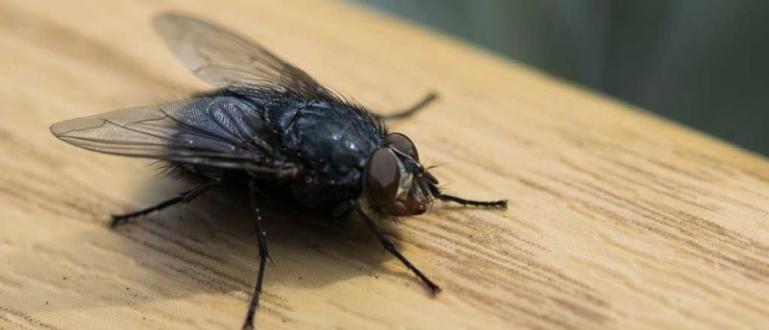 Домашната муха съвсем не е безобиден съжител на човека. Руска