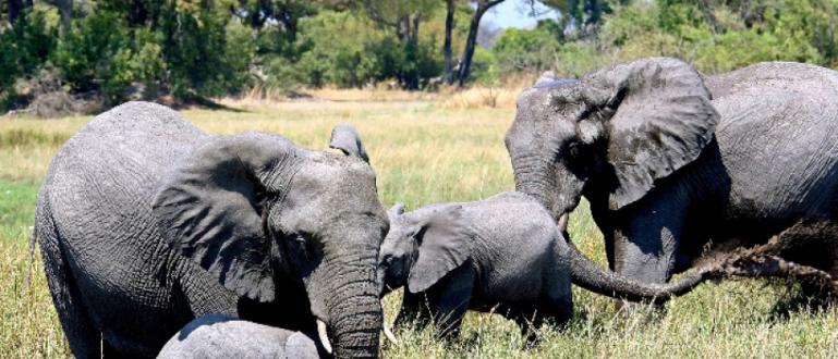 Стотици слонове са умрелимистериозно в делтата на рекаОкаванго в Ботсвана,
