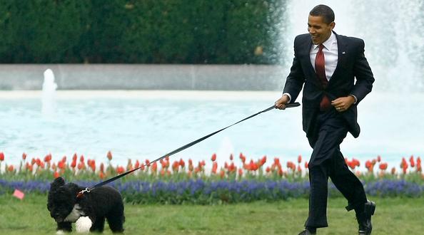 Повечето американски президенти досега са били любители на домашните любимци.