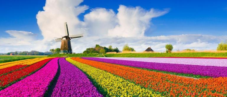 Производители на лалета в Нидерландия превърнаха днес площад
