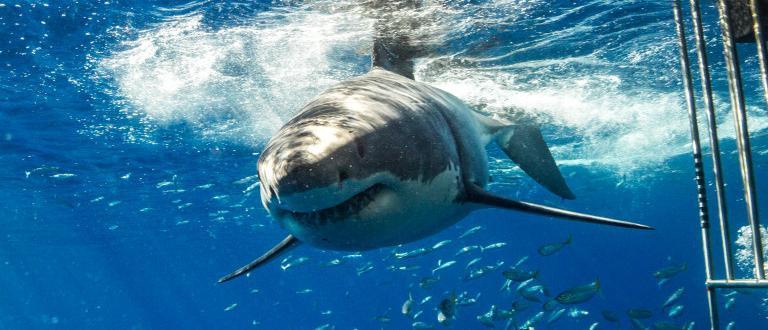 В Испания беше заснетовидео на акула, която обикаля до плувец,