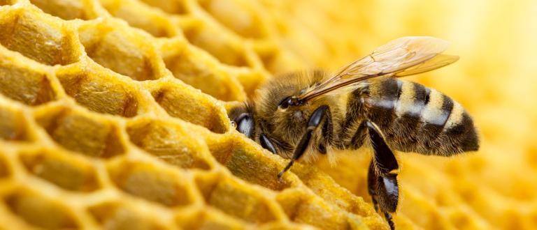 Франция забрани използването на петте неоникотиноидни пестициди, за които се