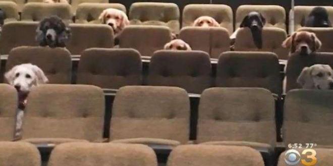 Държали семного възпитаноСлужебни кучета са заснети как присъстват на спектакъл